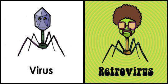 Explicación de virus y retrovirus