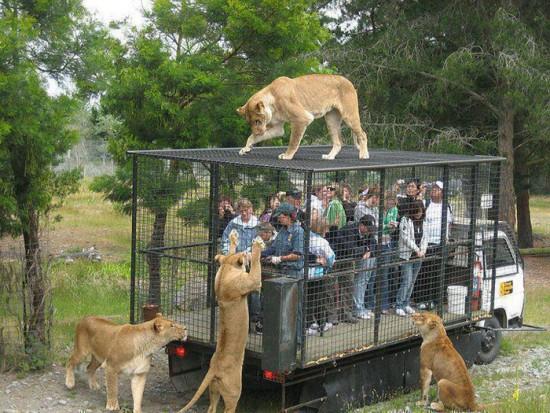 Zoo en Rusia