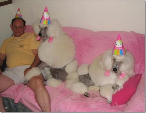 Estos perros están de lujo