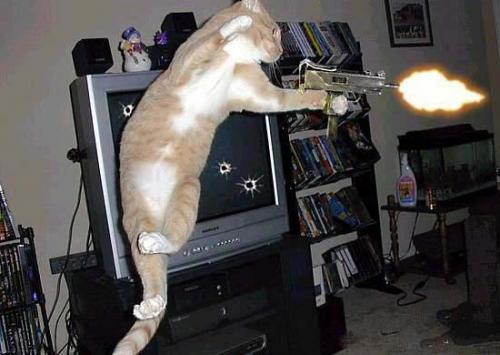 Como darle una pastilla a un gato